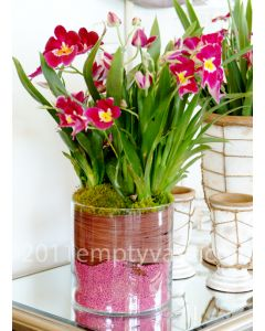 5 inches cylinder vases