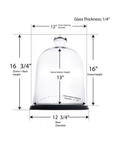 glass cloches dome with wood base display