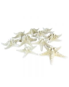 vase-filler-colored-knobby-starfish-VFSF01/05wt